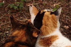 【静岡】野良猫数が半減「子猫も見ない」 裾野市でTNR(去勢して解放)活動報告