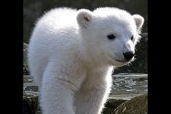 ロシアのシロクマ怖すぎワロタ
